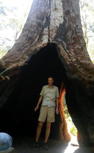 Walpole Treetopwalk