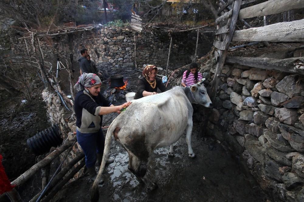 Kara kazanda sular bu kez 'inekler' için ısıtıldı