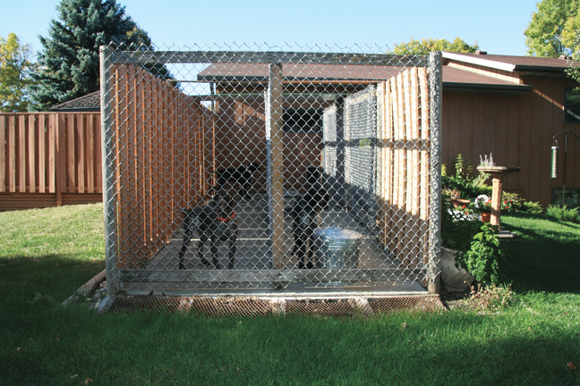 How To Build The Perfect Dog Kennel