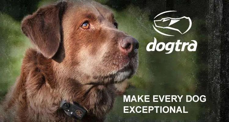 Dogtra|e-collars|gun dog outfitter|gun dog outfitters