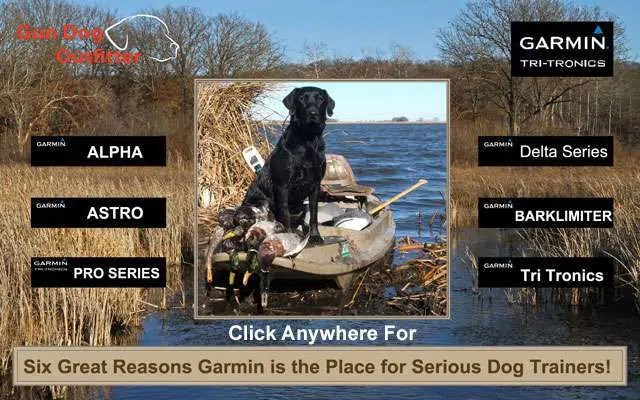 Six great reasons garmin is the place for serious dog trainers