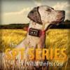 DT Systems Super Pro e-Lite Trainer 1 Dog