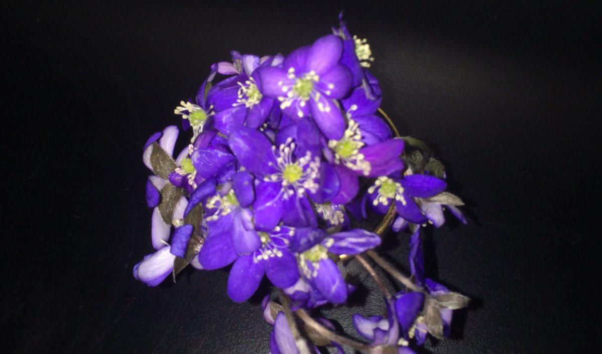 Blomster #Blogg100 37