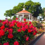 敷島公園は県内一のバラ園と充実した施設が魅力の県立公園!【群馬】おすすめスポット