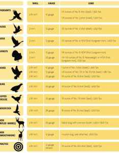 Different shotgun bird and buckshot shell size loads used for hunting in also sizes comparison chart commonly terms rh gunnewsdaily
