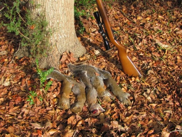 How to Choose the Best Survival Rifle (for Hunting or Defense)
