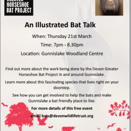 Illustrated Talk on Bats in Our Valley