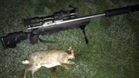 Introducing the Howa 1500  204 Ruger | New Fox/Varmint Rifle