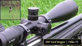 290 Yard Magpie Tikka T3 Varmint .223
