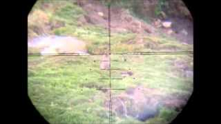 70 yard Kalibrgun Rabbit Scope Cam