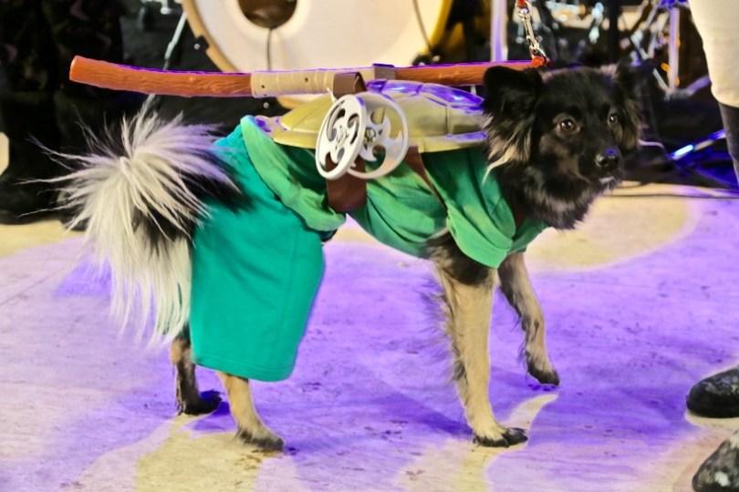 Yukon Sourdough Rendezvous Festival - 2016 | Photo – Gurdeep Pandher