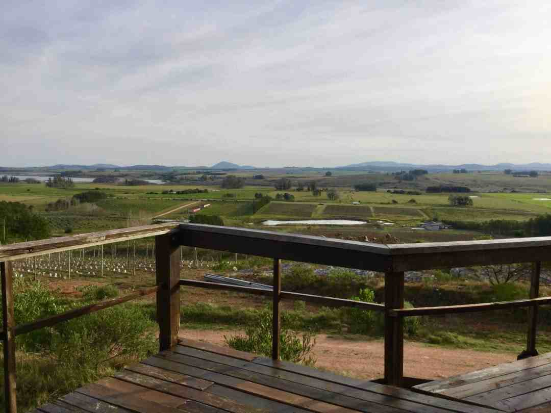best wineries in Uruguay