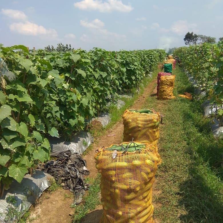 Hasil pertanian dan perkebunan antara lain padi, jagung, ubi, kedelai, sagu, umbi-umbian, sayuran, dan buah-buahan.