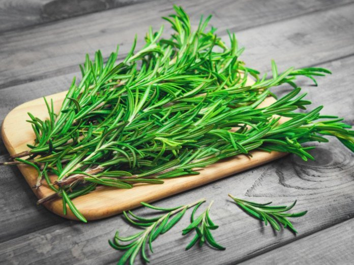 rosemary organic herb for weight loss