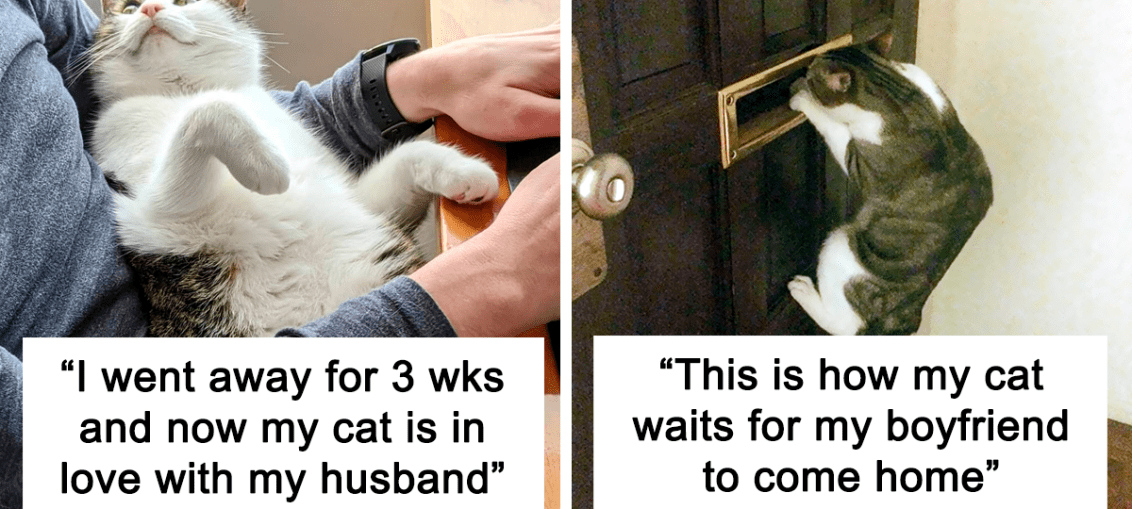 """50 """"Shameless"""" Pets That Stole Their Owners' Partners And Didn't Even Feel Sorry About It (New Pics)"""
