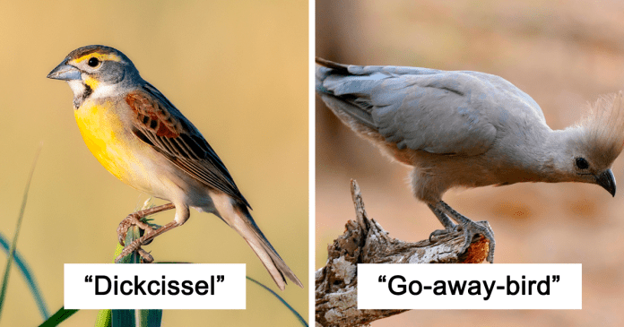 Swallows And Other 28 Bird Species Named By Ornithologists That Got Creative