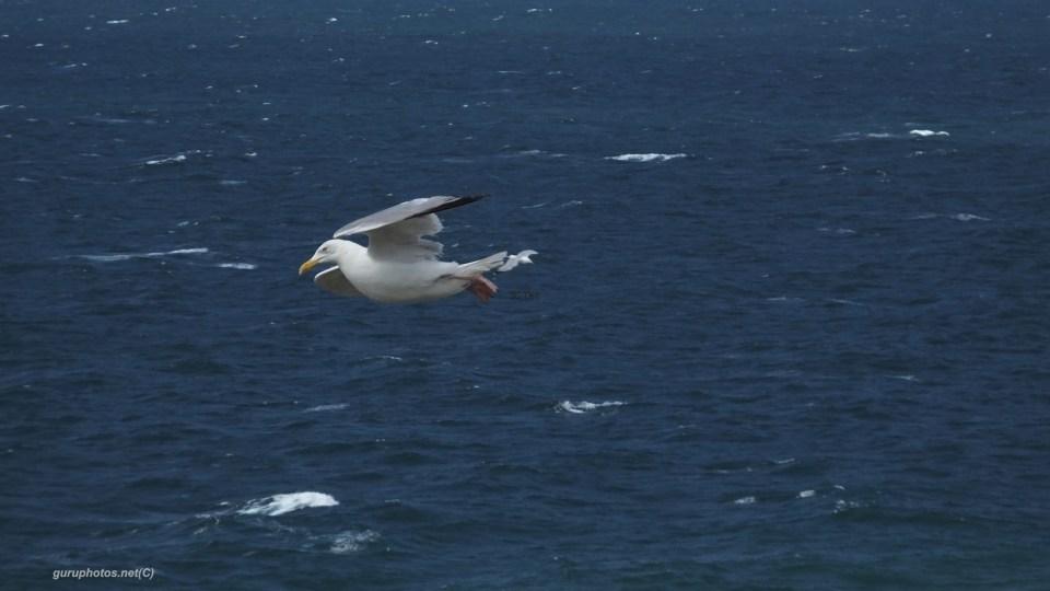 birdsDSCF0176
