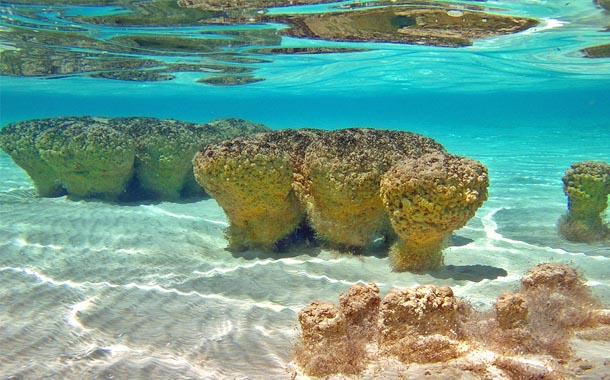 The stromatolites... - Blog