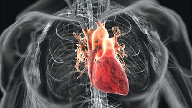 Human-Heart-HD-Wallpapers5