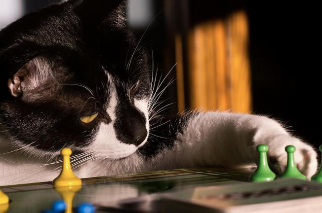 cat-playing-a-game-lori-coleman
