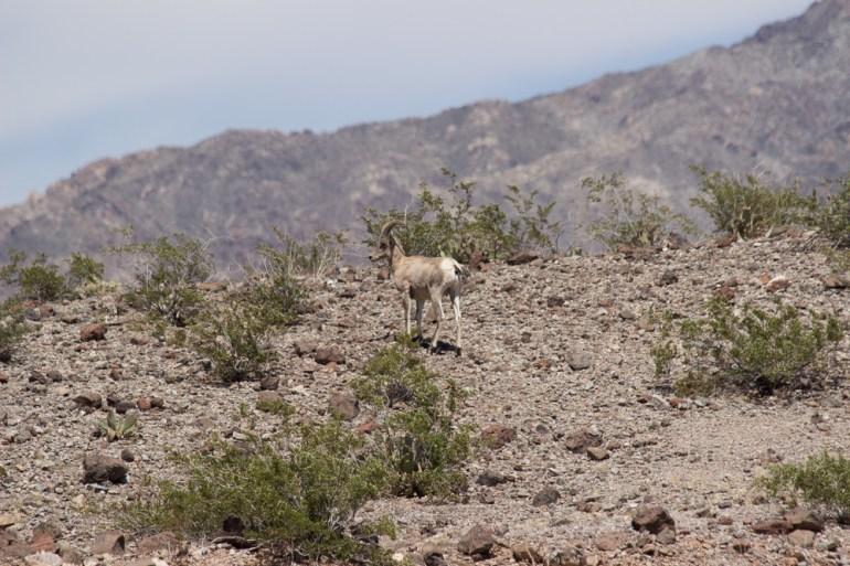 Arizona-6575