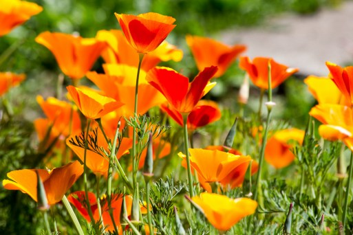 flowers-8076