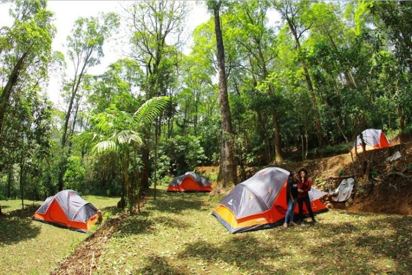 Camping Ground Mojosemi Forest Park