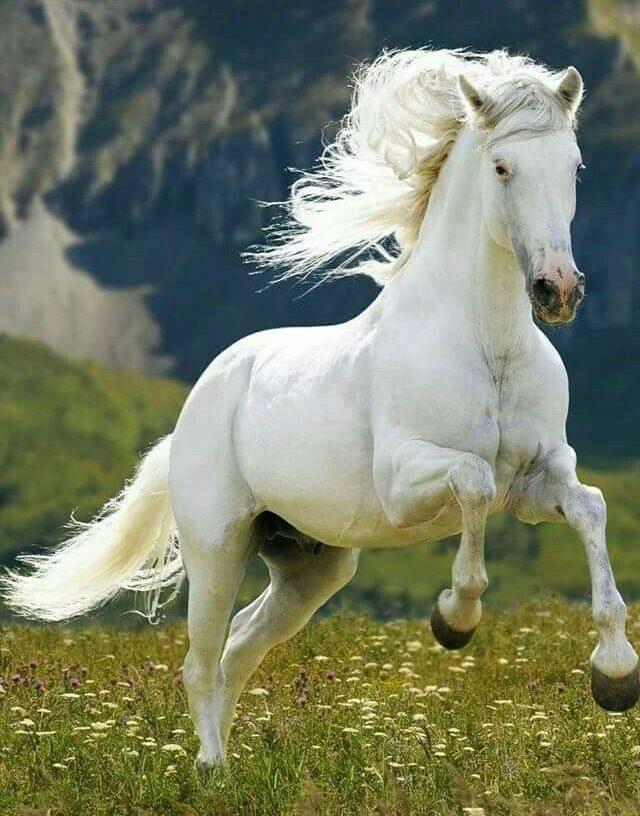 White Horse Coat