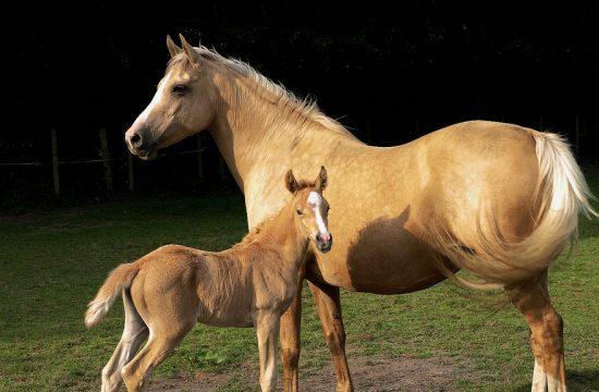 Vitaminas para caballos