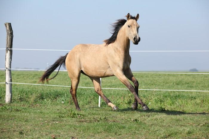 la mente del caballo