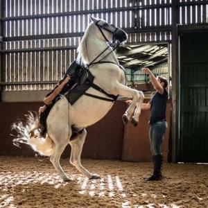 Atkinson Action Horses-Ben Atkinson