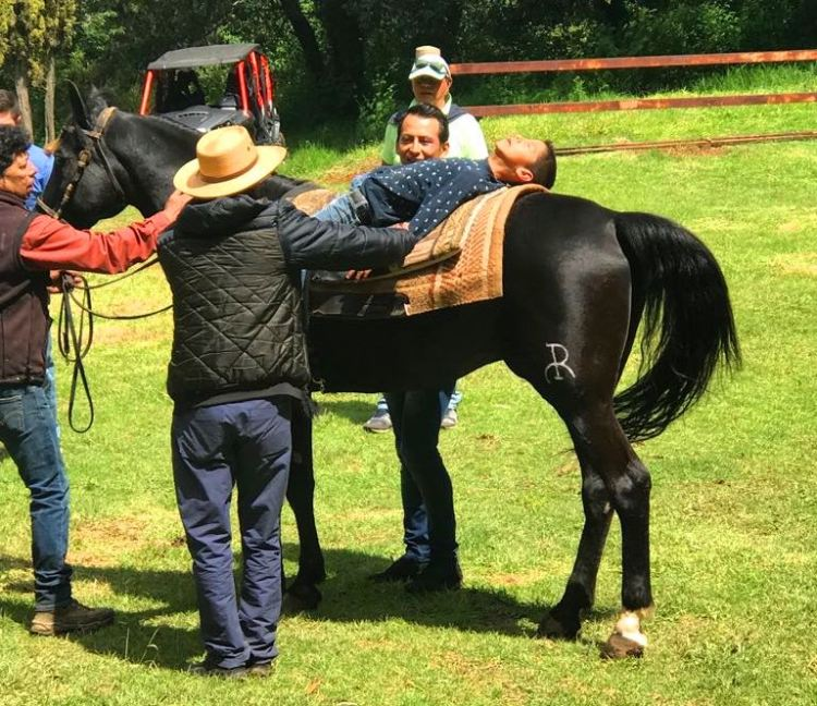 Equine Therapy Principles