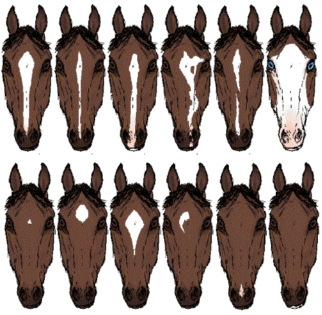 Horse Face Markings