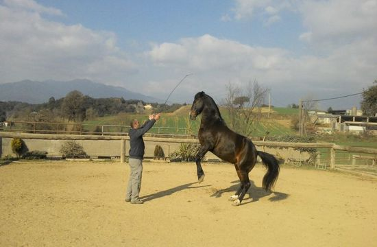 A good horse trainer
