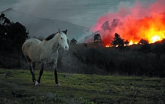 Horse in a Fire- Theater Play