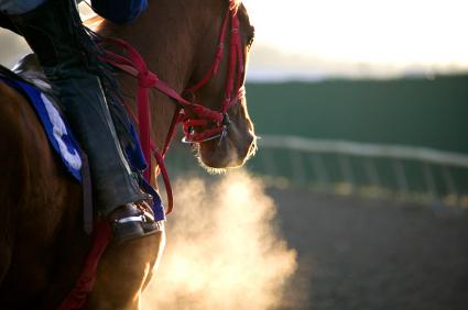 Horse Breathing