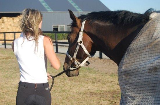 Horses Handling