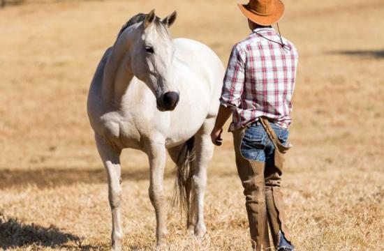 Proper handling of the horse