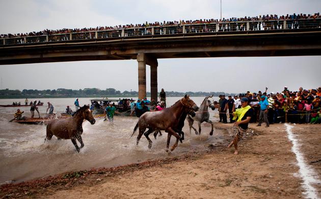 Swimming horse race in San Fernando de Apure