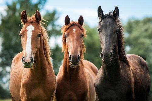 estimula a tu caballo