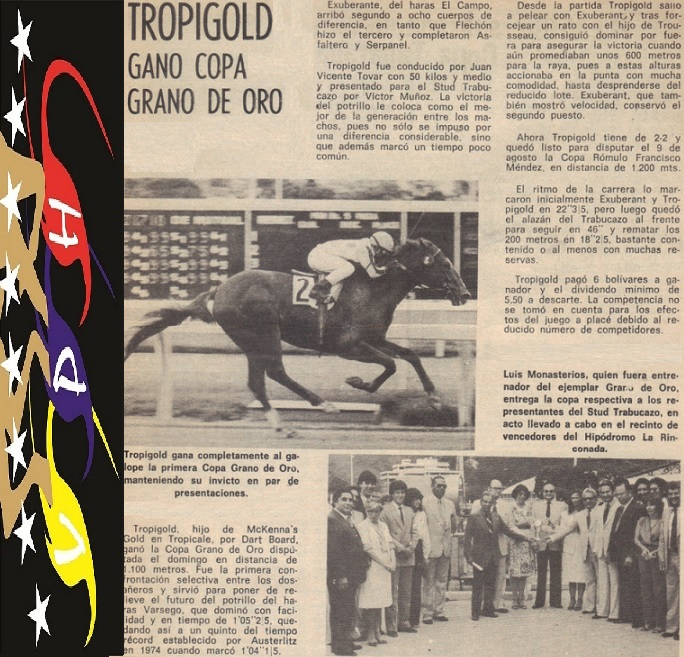 Tropigold Horse