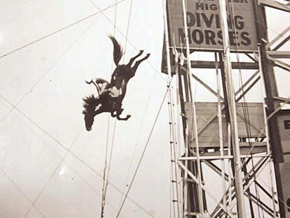 Diving Horse