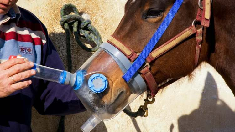 Nebulizer with steroids for asthma in horses