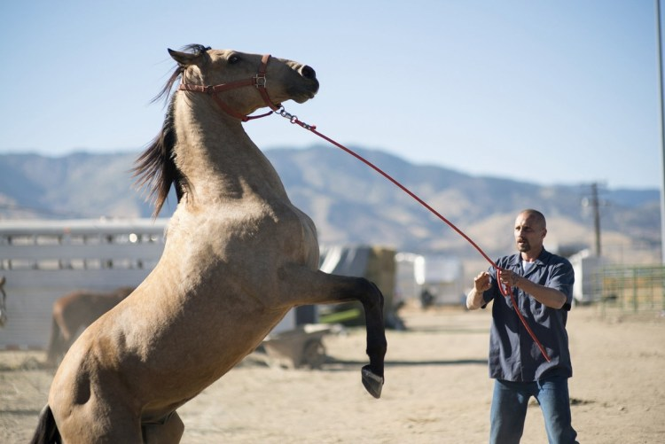 Taming the wild Mustang