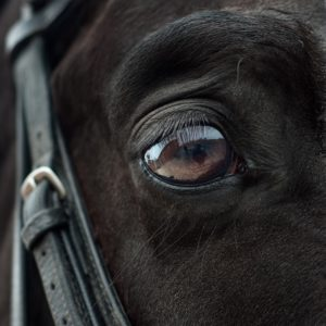 The look of the horse