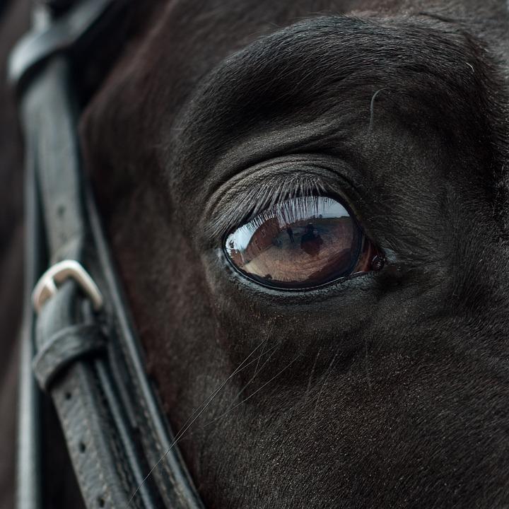 Sensibilidad del caballo