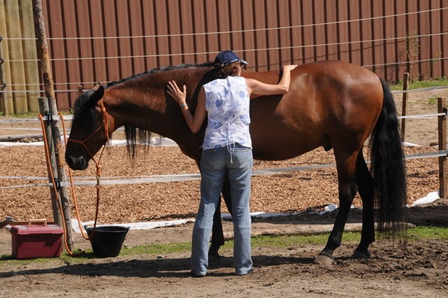 Creating emotional bonds with your horse