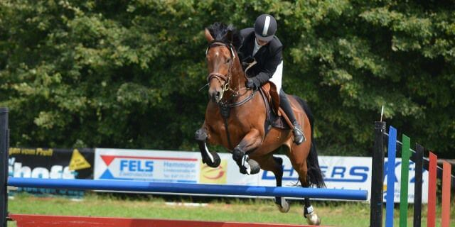 Gustavo Mirabal y su raza de caballos preferida