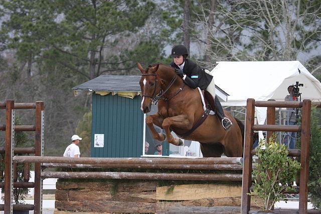 Chesnut Hanoverian Horse