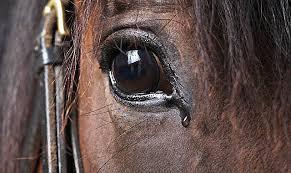 Dolor en los caballos